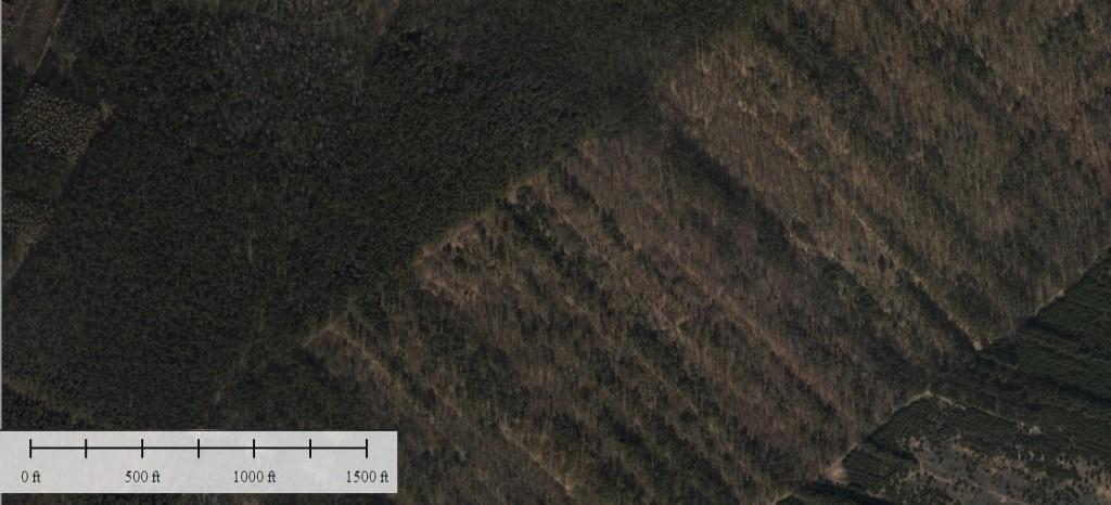 Ortofotomapa (w uproszczeniu zdjęcie lotnicze) tego samego obszaru. Widać w zasadzie jedynie korony drzew.