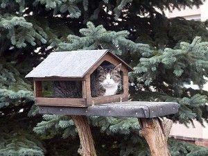 Kot w karmniku