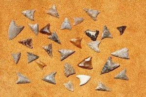 Neolityczne groty znalezione w Wilczycach