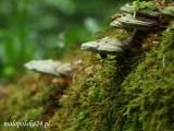 Natura2000 – naturalne korzyści