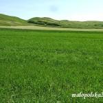 Krajobraz z murawą - okolice Młodzawy Duże.