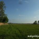 Podmokła łąka nad Nidą - okolice Młodzawy Duże.