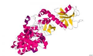 Model wstążkowy białka