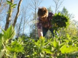 O roślinach uczyć będą