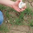 Miejsce eksploatacji krzemienia czekoladowego odnaleźli w Górach Świętokrzyskich archeolodzy z warszawskiego UKSW. Krzemienia do wyrobu narzędzi używała ludność kultury lubelsko-wołyńskiej zamieszkująca m.in. te tereny na przełomie V i IV tysiąclecia […]