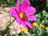 Hodujmy własne pszczoły
