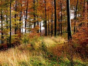 Jesień. Foto: Nikater, Wikimedia.