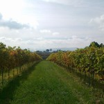 Winnica Hybridium Witanowice