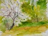 Maj, miesiąc kwitnących drzew