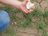 Krzemienny rdzeń sprzed 4 tys. lat. Foto: W. Grużdź. Zdjęcie dzięki uprzejmości Archeowieści.