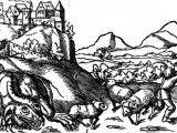 Smok wawelski na rycinie Sebastiana Münstera, Cosmographie Universalis.